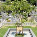 樹木墓地 宙