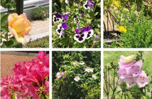 花々イメージ
